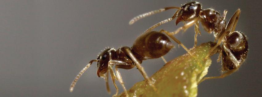 textile pest insect control bpca